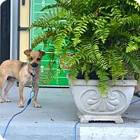 Adopt A Pet :: Effie - Marietta, GA