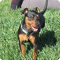 Adopt A Pet :: Cassidy - Sacramento, CA
