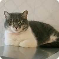 Adopt A Pet :: Star - Geneseo, IL