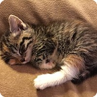 Adopt A Pet :: P.I.E - Loveland, CO