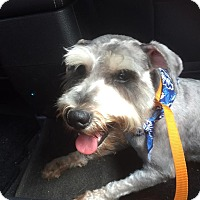 Adopt A Pet :: George - Gainesville, FL