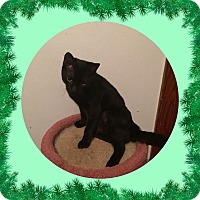 Adopt A Pet :: Blackie - Hampton, VA