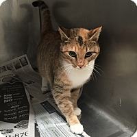Adopt A Pet :: Chelsea - Lancaster, VA