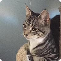 Adopt A Pet :: Jackie - Berkeley Hts, NJ