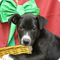 Adopt A Pet :: Chuck - Waldorf, MD