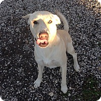 Adopt A Pet :: Buddy - Pointblank, TX