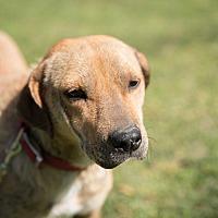Adopt A Pet :: Hayden - Daleville, AL