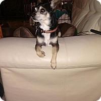 Adopt A Pet :: Bosley - Edmond, OK