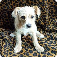 Adopt A Pet :: Jordie - Thousand Oaks, CA
