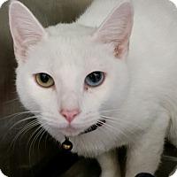 Adopt A Pet :: Dutchess - Chula Vista, CA