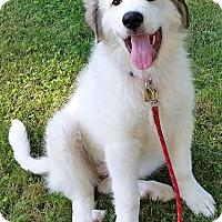 Adopt A Pet :: Miley - new pup! - Beacon, NY
