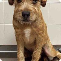 Adopt A Pet :: Rascal - Channahon, IL