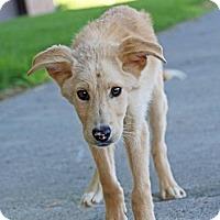 Adopt A Pet :: Chadwick - Salt Lake City, UT