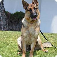 Adopt A Pet :: Erin - Mira Loma, CA