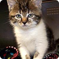 Adopt A Pet :: Willow - Fairborn, OH