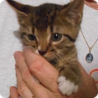 Adopt A Pet :: Tony - Parkton, NC