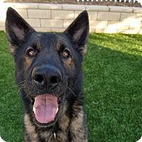 Adopt A Pet :: Krieger - Santa Clarita, CA