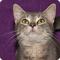 Adopt A Pet :: Amy (Combo Tested) - Marietta, OH