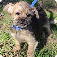 Adopt A Pet :: JOCELYN - Jacksonville, FL