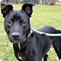 Adopt A Pet :: Baxter - Michigan City, IN