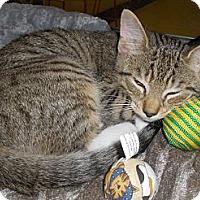 Adopt A Pet :: Anton - Richmond, VA