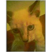 Adopt A Pet :: Boxman - Owasso, OK