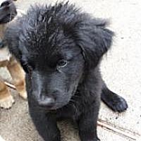 Adopt A Pet :: Kari - Stafford Springs, CT