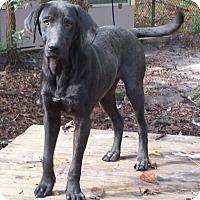 Adopt A Pet :: Sissy - Little River, SC
