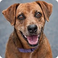 Adopt A Pet :: Emmy - Jupiter, FL