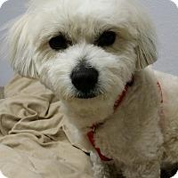 Adopt A Pet :: Zippy - Kirkland, WA