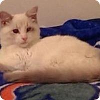 Adopt A Pet :: Xander - Gainesville, FL