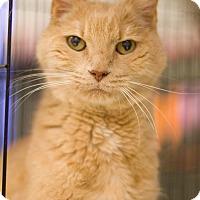 Adopt A Pet :: Miss D. - Grayslake, IL