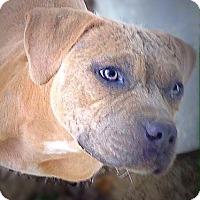 Adopt A Pet :: Fern - Cincinnati, OH