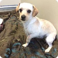 Adopt A Pet :: Baxter - benson, NC