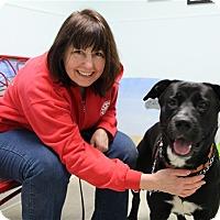 Adopt A Pet :: Duke-Prison Dog - Elyria, OH
