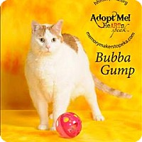 Adopt A Pet :: Bubba Gump - Topeka, KS