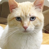 Adopt A Pet :: Flame - Jasper, TN