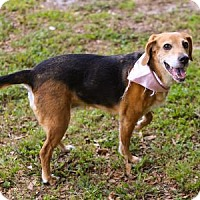Adopt A Pet :: Maggie - Lakeland, FL