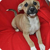 Adopt A Pet :: Andy - Erwin, TN