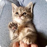 Adopt A Pet :: Timber - Long Beach, NY
