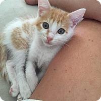 Adopt A Pet :: Mango - Jacksonville, FL