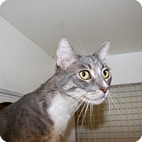 Adopt A Pet :: Thumper - Palm desert, CA