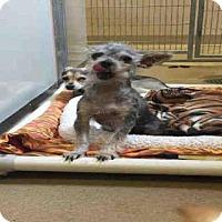 Adopt A Pet :: *JULIA - Sacramento, CA