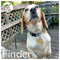 Adopt A Pet :: Finder - Pittsburgh, PA