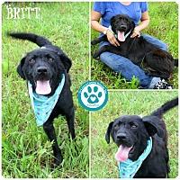 Adopt A Pet :: Britt - Kimberton, PA
