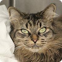 Adopt A Pet :: *JINX - Las Vegas, NV