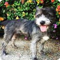 Adopt A Pet :: Hershey - Santa Cruz, CA