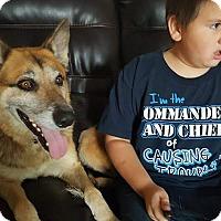 Adopt A Pet :: Nick - Salem, OR
