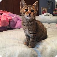 Adopt A Pet :: Buzz Lightyear - Clarkson, KY