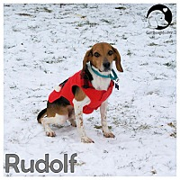 Adopt A Pet :: Rudolf - Pittsburgh, PA